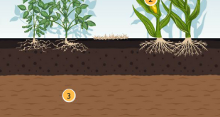 Canh tác Bền vững, chỉ cần Đất khoẻ