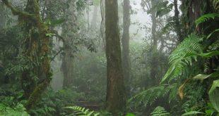 80.000 loài cây trên Trái đất sắp tuyệt chủng