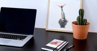 Ai thường xuyên dùng máy tính, mua ngay 7 loại cây này để chống bức xạ điện từ