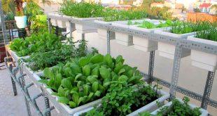 Cách trồng rau sạch trong thùng xốp tại nhà đơn giản