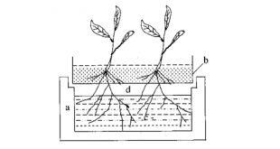 Hướng dẫn chi tiết kỹ thuật thủy canh (phần 1)