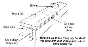 Hướng dẫn chi tiết kỹ thuật thủy canh (phần 3)