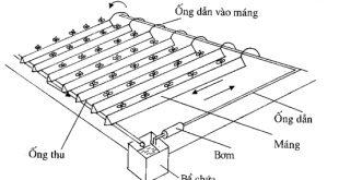 Hướng dẫn chi tiết kỹ thuật thủy canh (phần 4)