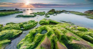 Loài rêu cổ đại đã chuẩn bị cơ sở để loài người xuất hiện