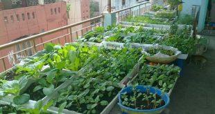 Mô hình trồng rau sạch trong nhà đơn giản, hiệu quả cao