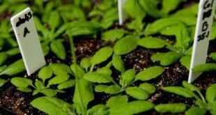 Phát hiện mới trong cơ chế gây bệnh ở thực vật