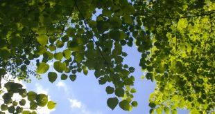 Tại sao có loài thực vật thích ánh sáng Mặt trời, có loài thực vật thì thích bóng râm?