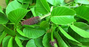 Tại sao một số thực vật lại có độc?