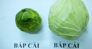 Tuyệt chiêu đơn giản để nhận biết rau củ quả Trung Quốc