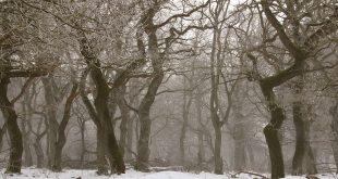 Vào mùa đông khi rụng lá, cây có tổng hợp các chất hữu cơ không?