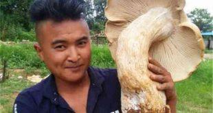 Xôn xao phát hiện 3 cây nấm khổng lồ chưa từng thấy